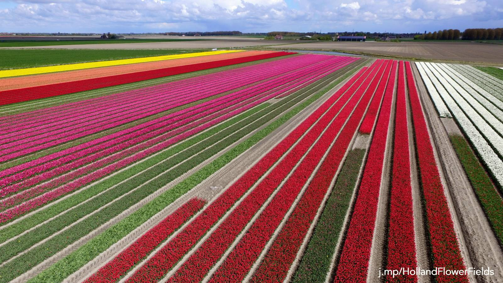 bulb fields Netherlands
