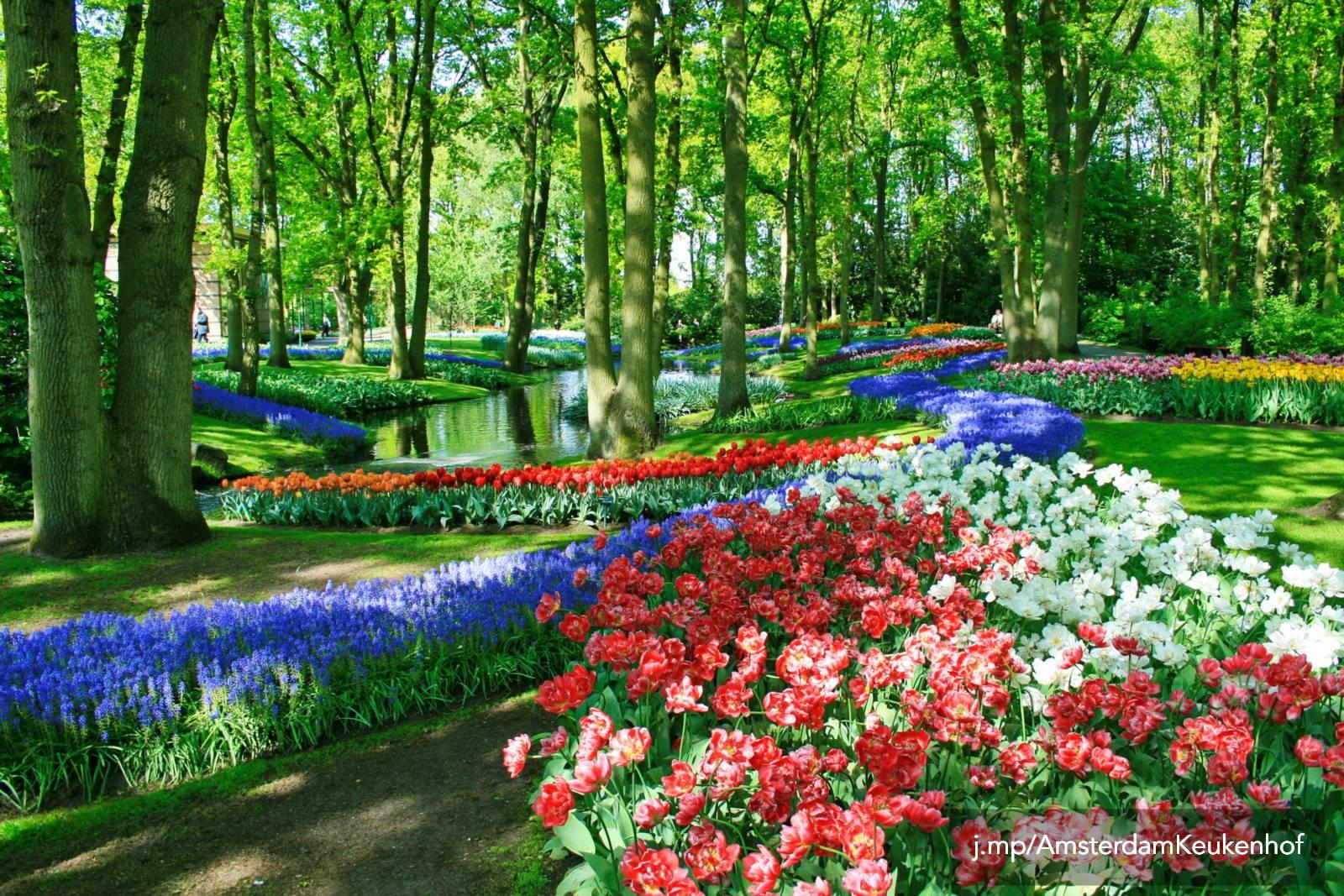 Keukenhof flower garden